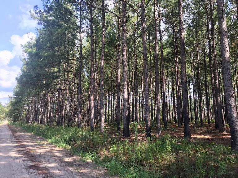 21.96 AC: Recreational / Timberland - Damascus, GA